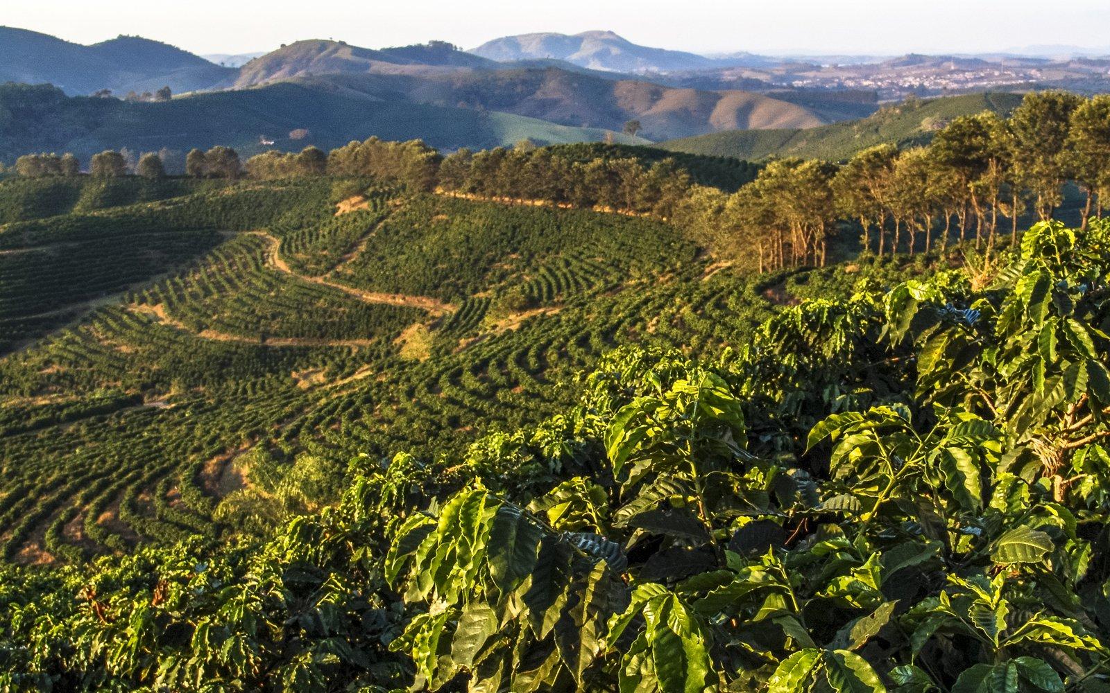 Brazilian Coffee Areas